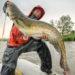 Wędkarstwo sumowe – fakty i mity
